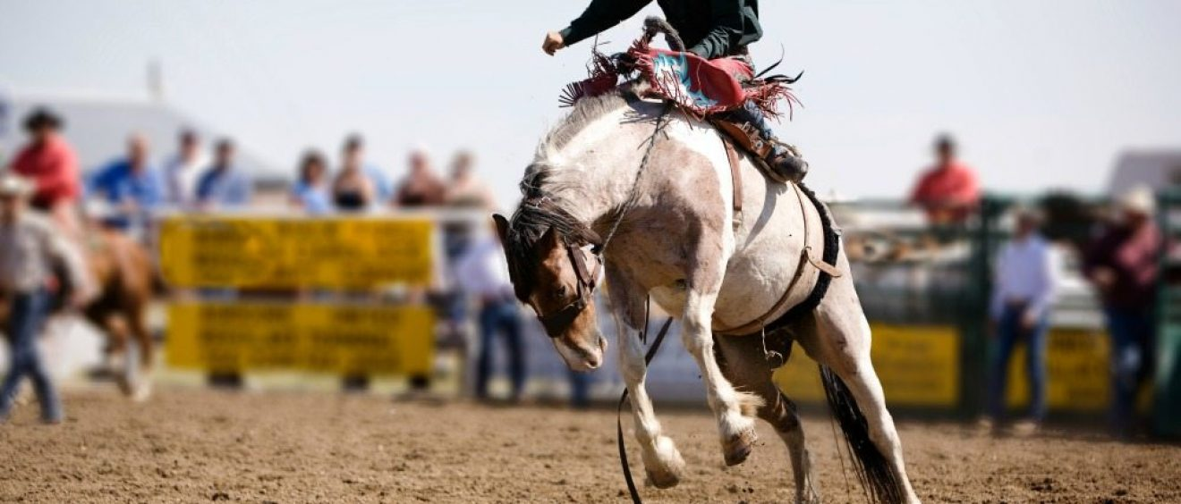 Omak Rodeo and Stampede